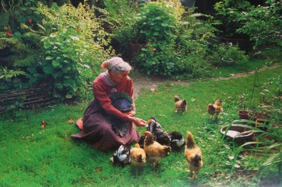 tasha chickens
